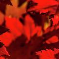 Fall Coffee Mug by Joel Buhs
