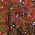 Fall Collage by Leslie Gatson-Mudd