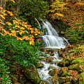 Fall Color Back Fork Waterfall by Thomas R Fletcher
