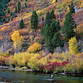 Fall Color Fisherman Near Provo Utah by Dave Welling