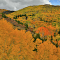 Fall Color Galore Along Last Dollar Road by Ray Mathis