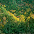 Fall Color Near Reedsport Oregon by Dave Welling