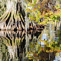 Fall Color Reflection by Stefan Mazzola