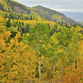 Fall Colors Along The Descent From Owl Creek Pass by Ray Mathis