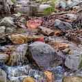 Fall Colors At Madera Creek by Chance Kafka