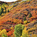 Fall Colors Erupt Along Highway 133 South Of Mcclure Pass by Ray Mathis