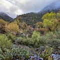 Fall Colors In Sabino Canyon Arizona by Dave Dilli