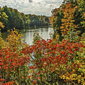 Fall Colors On Sumac And Trees by Sue Smith