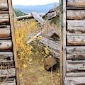 Fall Door 2 by Tonya Hance