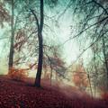 Fall Feeling by Dirk Wuestenhagen