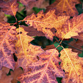 Fall Flames by Whitney Goodey