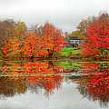 Fall Foliage In Rural New Hampshire by Denistangneyjr