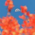 Fall Half Moon by Dan Sproul