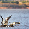 Fall Migration At Whittlesey Creek by Susan Rissi Tregoning