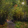 Fall Path by Chance Kafka