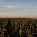 Fall Wind Field H by Dylan Punke