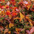 Fallen Colourful Leaves In Autumn by Torbjorn Swenelius