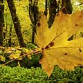 Fallen Leaf by Jean Noren