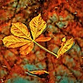 Fallen Leaves And Reflections by Martyn Arnold