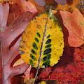 Fallen Leaves by Daniel Reed