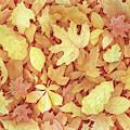 Fallen Leaves by Lori Taylor