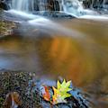 Fallen Oak Leaf In Vaughan Woods by Rick Berk