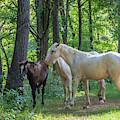 Family Of Horses by Terri Morris