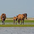Family Unit Walking Toward Water by Dan Friend
