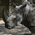Fantastic Profile Of A Rhino With A Long Horn by DejaVu Designs