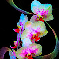 Fantasy Orchids In Full Color by Rosalie Scanlon