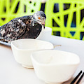 Fast Food Asian Pigeon by Jorgo Photography - Wall Art Gallery