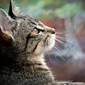 Feline Dreaming by Jean Noren