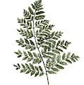 Fern Twig Illustration Grey Plant Watercolor Painting by Joanna Szmerdt