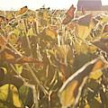 Field Illumination by Dylan Punke