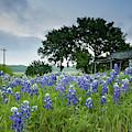 Field Of Blue by Patti Schulze