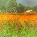 Field Of Dreams by Jack Wilson
