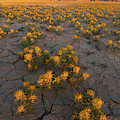 Fields Of Gold by Dustin LeFevre