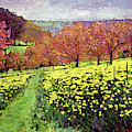 Fields Of Golden Daffodils by David Lloyd Glover