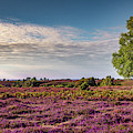 Fields Of Heather by Framing Places