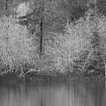 Filter Series 200b by Jeni Gray