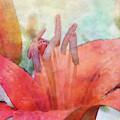 Flamingo 7148 Idp_2 by Steven Ward