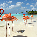 Flamingos On The Beach by Vanwyckexpress