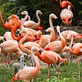 Flamingos Outdoors by Top Wallpapers
