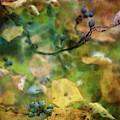 Floating Berries 6109 Idp_2 by Steven Ward