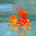 Floating Bird Of Paradise 1 by Dawn Richards
