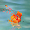Floating Bird Of Paradise 2 by Dawn Richards