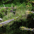 Floating Logs And Reflection by Robert Potts