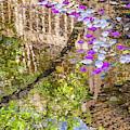 Floating Magnolia Petals by Jonathan Hansen
