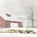 Flock Of Sheep by Lori Deiter