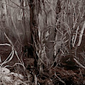 Floodplain Forest Vines In Sepia by Wayne King